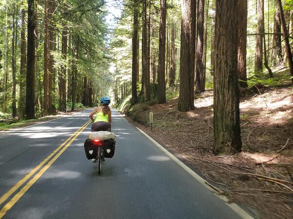 Redwood Biking