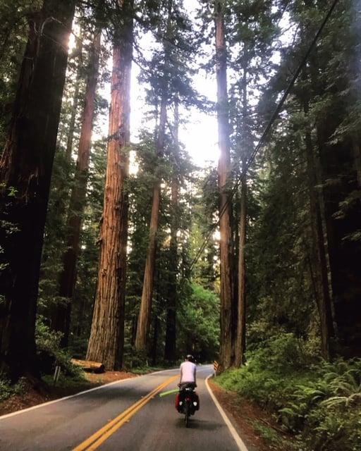 Redwood Biking