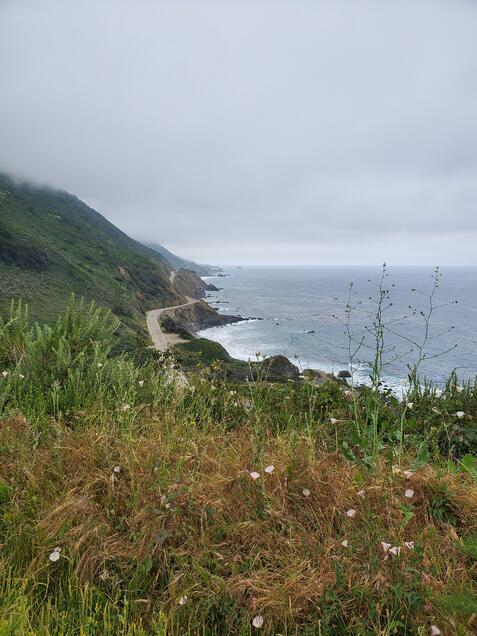 Buck Big Sur